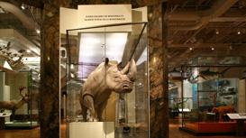 Schad Gallery of Biodiversity