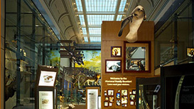 Smithsonian Behring Family Hall of Mammals